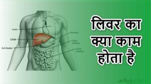 Liver Function in hindi|लिवर का क्या काम होता है।